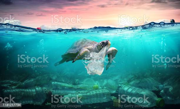 Plastic pollution in ocean turtle eat plastic bag environmental picture id1131217734?b=1&k=6&m=1131217734&s=612x612&h=swxdwc8tvsyehrqdebkfccuad5dbm0bprmy6wsgrwbe=