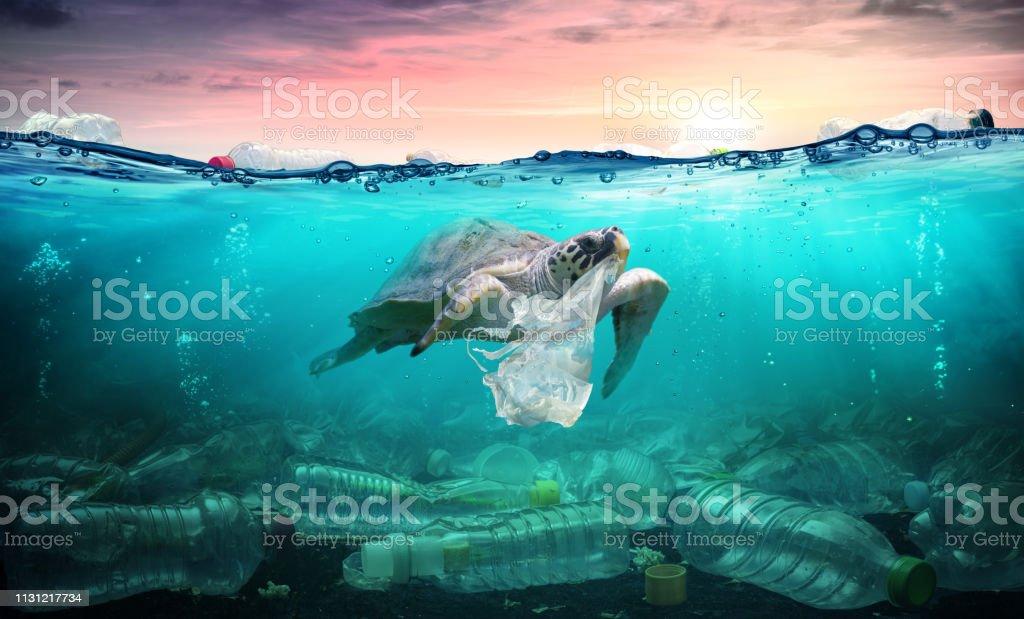 Pollution plastique dans l'océan-tortue manger sac en plastique-problème environnemental - Photo