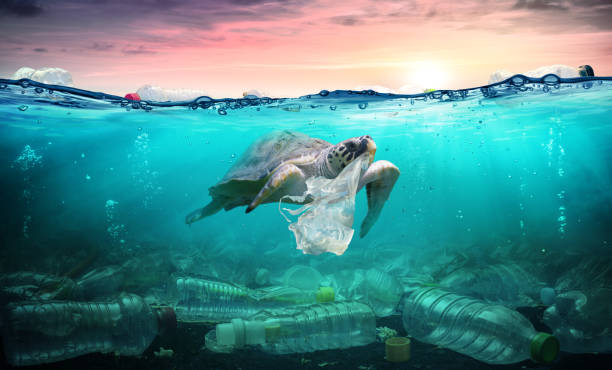 plastic pollution in ocean - turtle eat plastic bag - environmental problem - sea imagens e fotografias de stock
