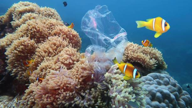plastic pollution of the coral reef - plastic stock pictures, royalty-free photos & images