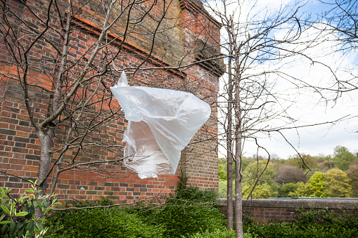 plastic rubbish bad blowing in the wind trapped in tree branches