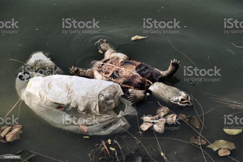 Kunststoff-Abfälle, Umweltproblem, Tote Schildkröte in giftige Wasser, kontaminierte Umwelt, Wast Wasser. – Foto