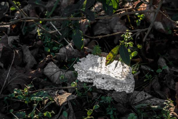 Plastikmüll mitten in der Natur entsorgt – Foto