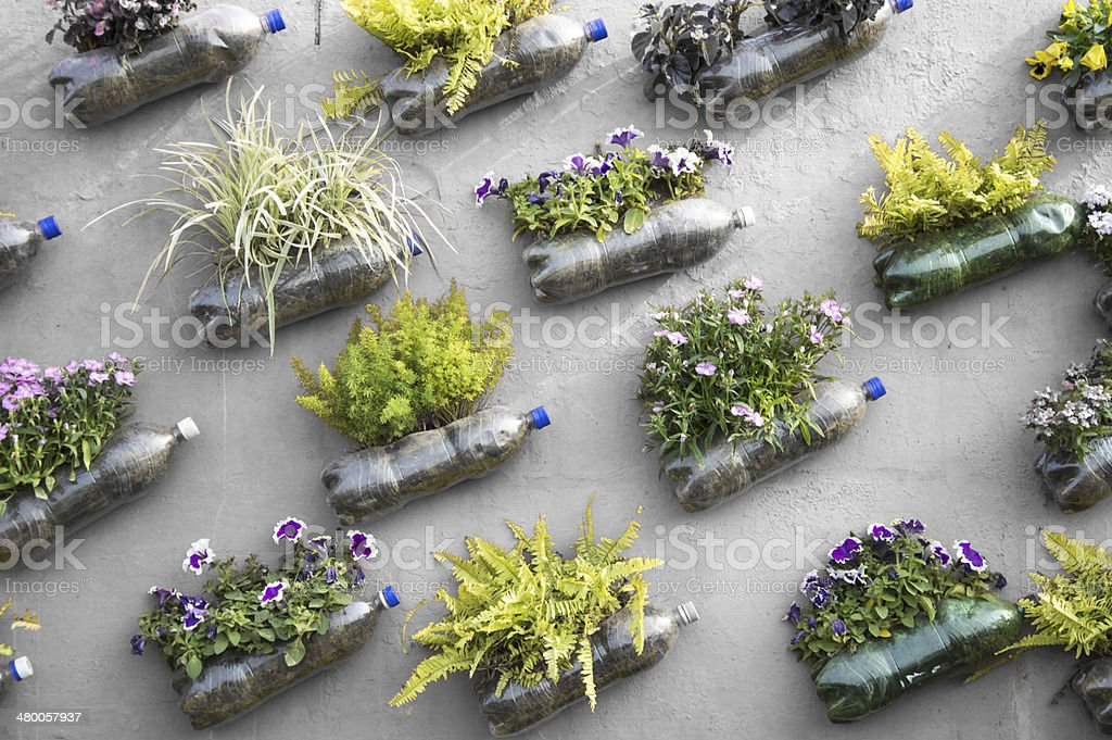 Plastoc pop bottle wall garden stock photo