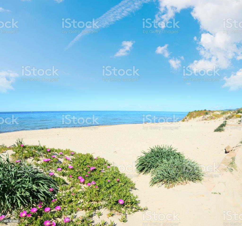 Platamona shore in the springtime - Стоковые фото Без людей роялти-фри