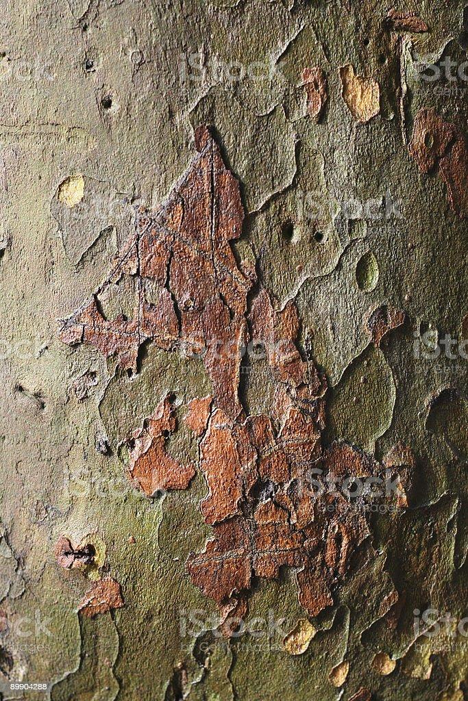 platan árbol de corteza foto de stock libre de derechos
