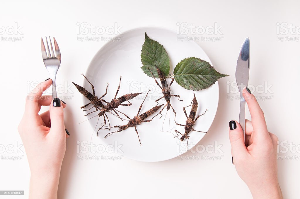 Plate full of insects in insect to eat restaurant stock photo