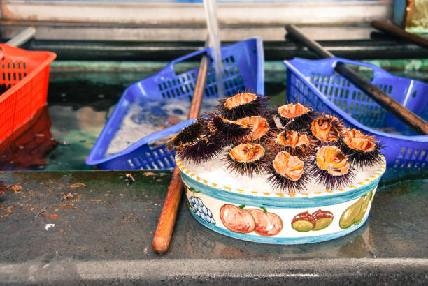 A plate of fresh Sea Urchins stock photo