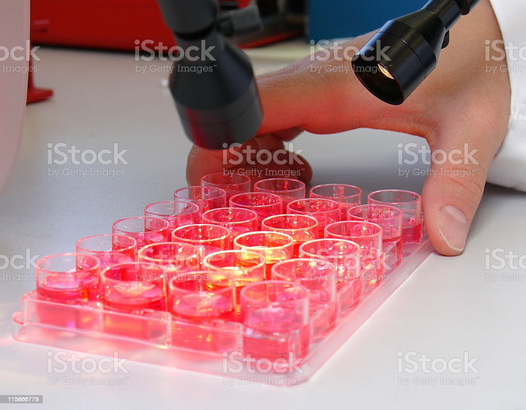 Plate with cultured cells stock photo