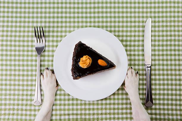 piatto cane con pezzo di torta al cioccolato. - sugar cane foto e immagini stock