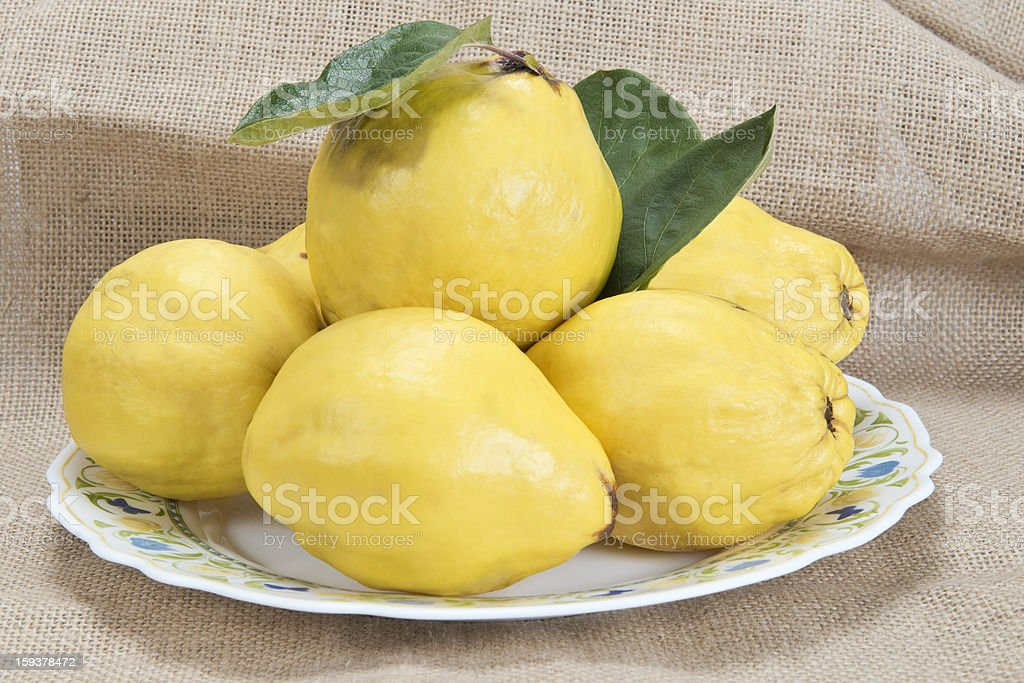 Plate with quinces royalty-free stock photo