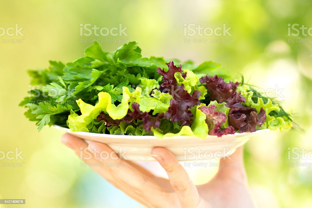 plate with salad and parsley and dill in hands stock photo