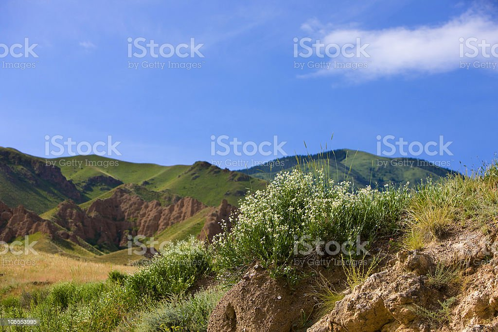 Plateau Assy in Kazakhstan, Asia. July morning. Caryophyllaceae / Gypsophila sp. stock photo