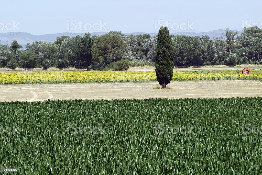 Plateau de Valensole (Provence), landscape at summer royalty-free stock photo
