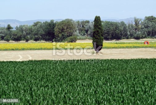 Plateau De Valensole Landscape At Summer Stock Photo & More Pictures of Agriculture