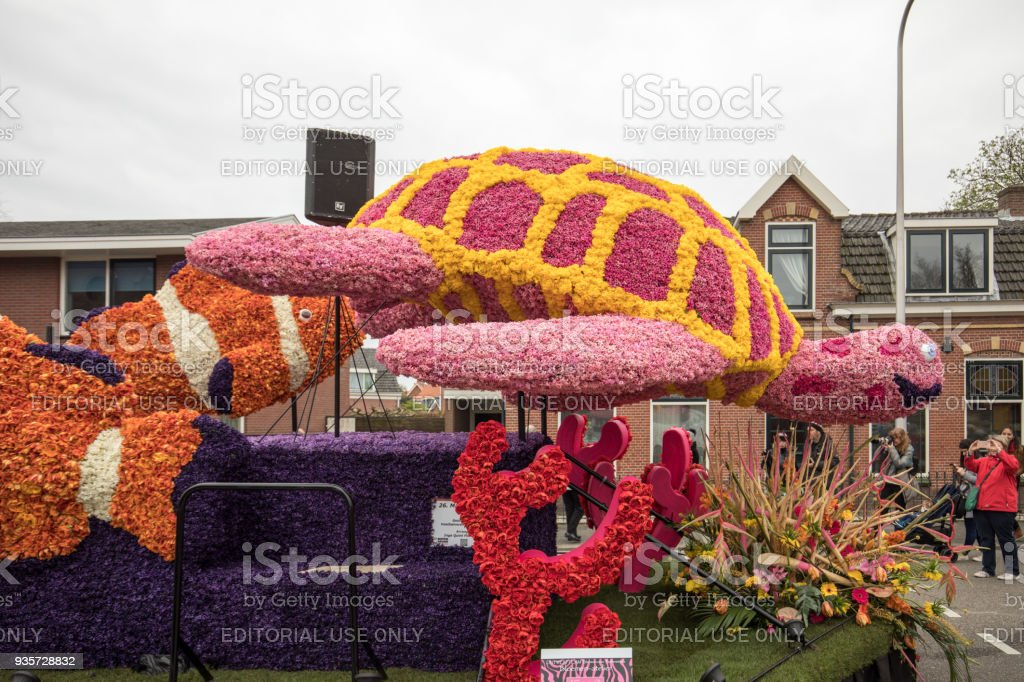 Platform with  tulips and hyacinths during the traditional flowers parade Bloemencorso from Noordwijk to Haarlem in the Netherlands. stock photo