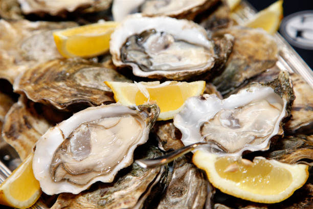 platter of oysters - oyster stock pictures, royalty-free photos & images