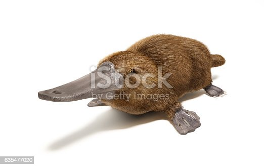 Platypus duck-billed animal. On white background with drop shadow.