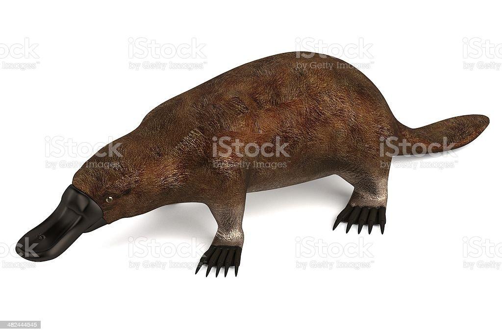 platypus stock photo