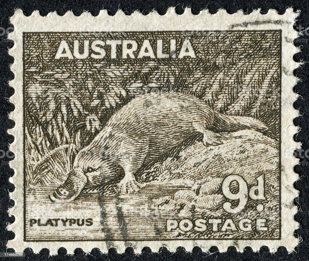Platypus Stamp stock photo