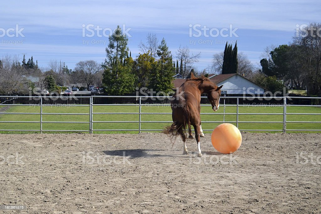 Play Ball 3 royalty-free stock photo