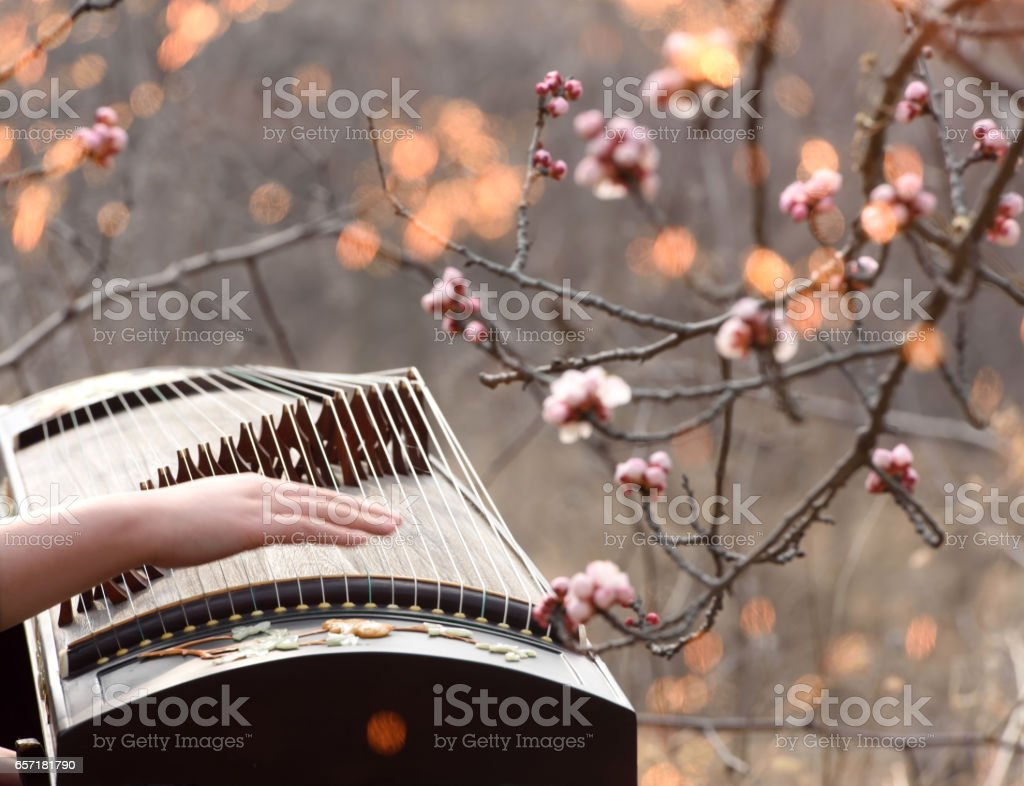Play Chinese zither in flowers stock photo