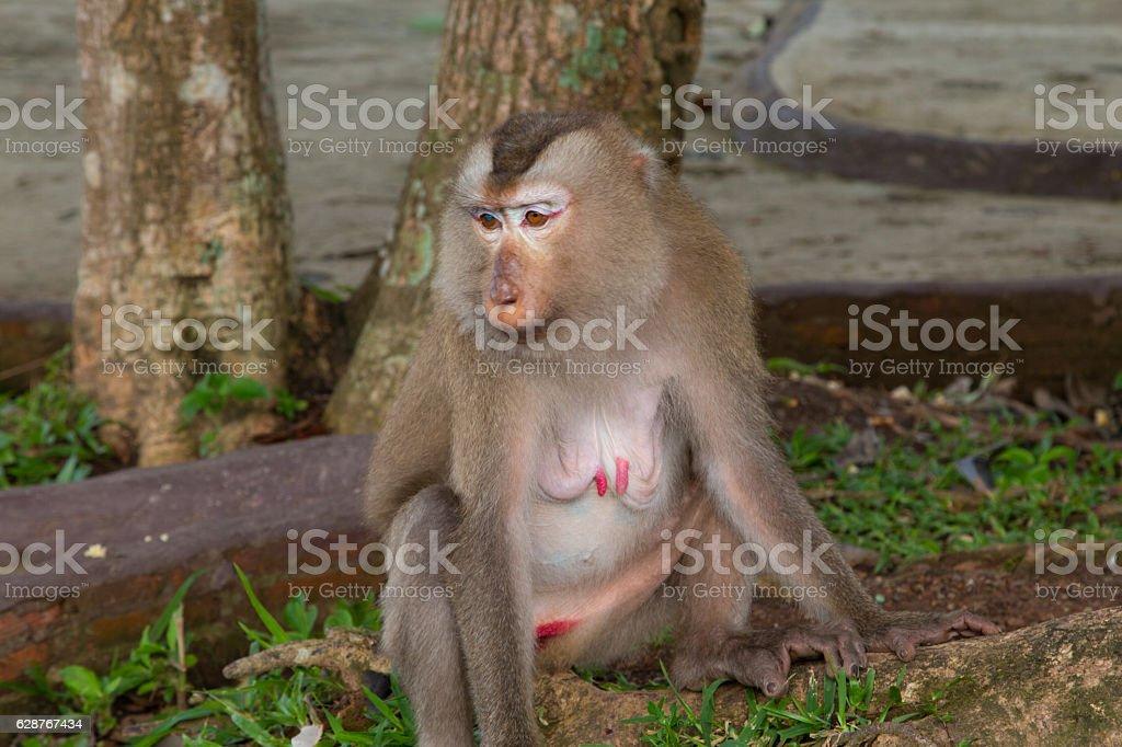 Play monkey sitting under the tree stock photo