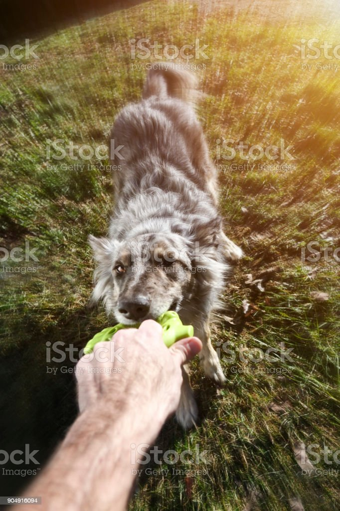Play with dog - foto stock