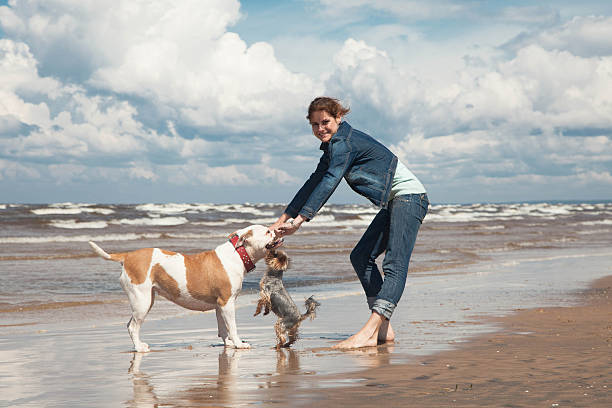 play with dogs stock photo