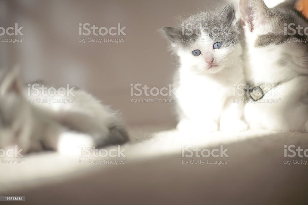 Play with me mom! stock photo