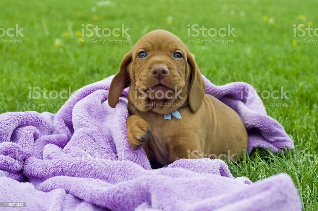 Play with me! royalty-free stock photo