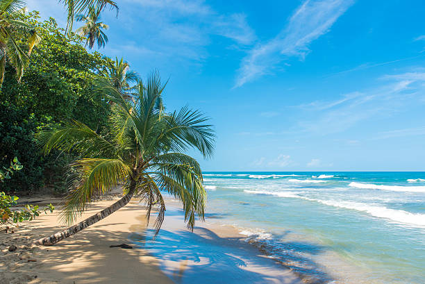 playa chiquita -  beach close to puerto viejo, costa rica - costa rica stockfoto's en -beelden