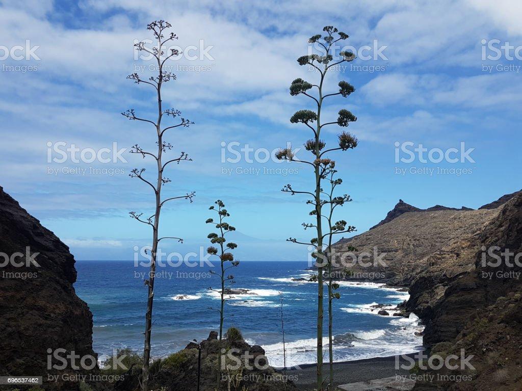 playa de la caleta stock photo