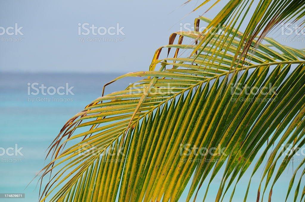 Playa Del Carmen, Mexico. royalty-free stock photo