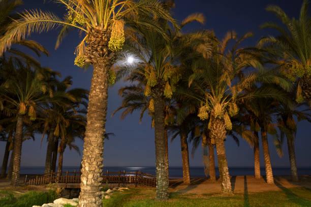 Playa la Macarena, Spanien – Foto