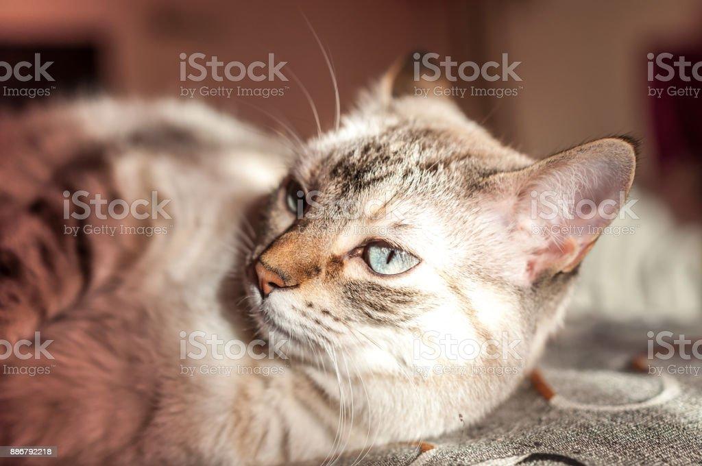 juguetón y travieso gato retozando en la manta sobre la cama - foto de stock
