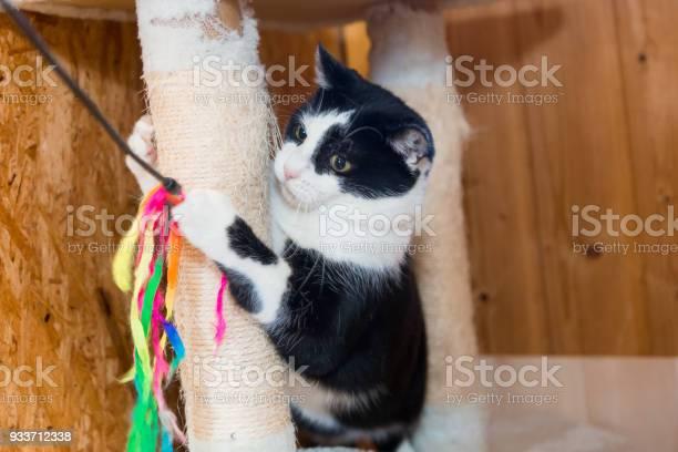 Playful black an white cat closeup picture id933712338?b=1&k=6&m=933712338&s=612x612&h=dqfukm4ea6gms6q7m8uqrmuatglwk926pixju4liblk=