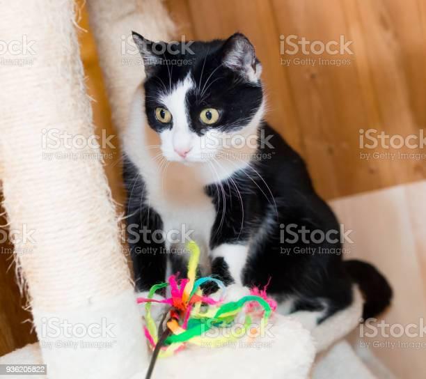 Playful black an white cat closeup picture id936205822?b=1&k=6&m=936205822&s=612x612&h=jv5n lm6jiqg9vyeybr0zagytwoohletju3ducf9tcq=