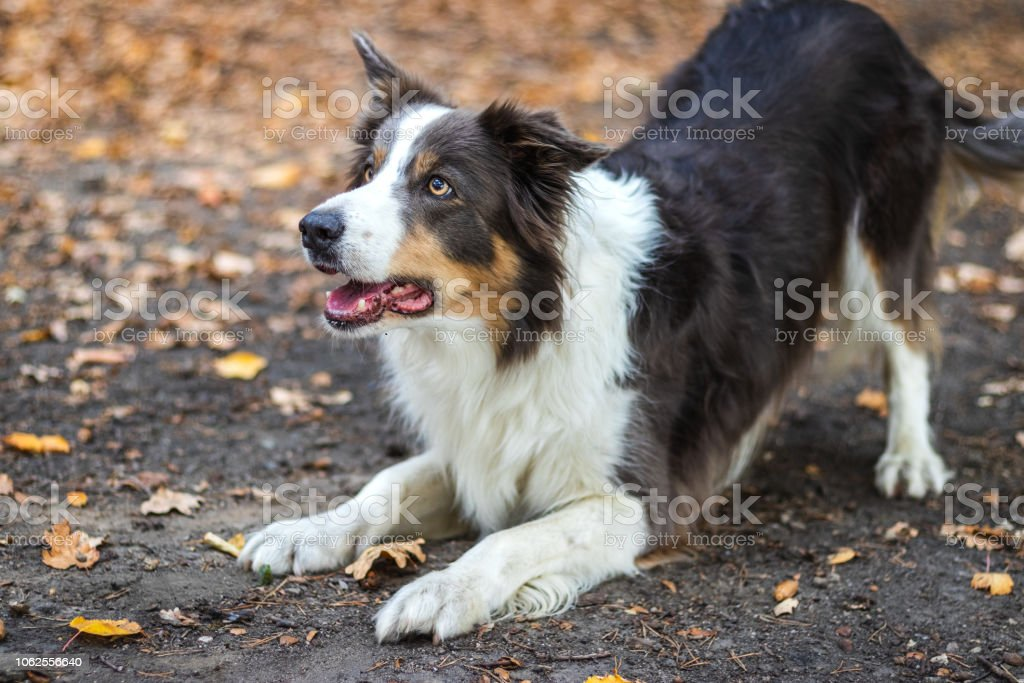 Cute pet dog outdoors.