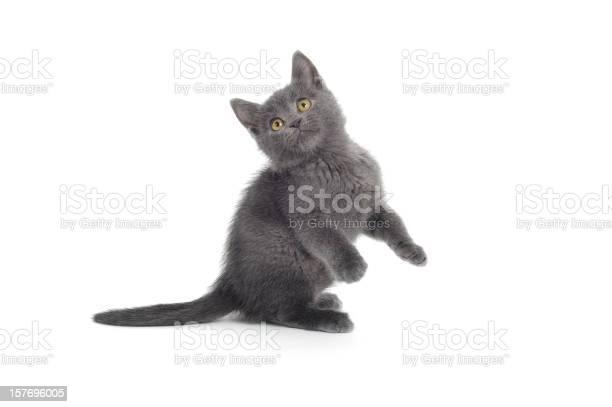 Playful cat picture id157696005?b=1&k=6&m=157696005&s=612x612&h= pu7znyk6hv8mtktq o7juhhdt9ptyozgopsc1yqpgc=
