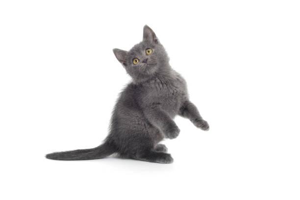 Playful cat picture id157696005?b=1&k=6&m=157696005&s=612x612&w=0&h=8khmcy4j64o0 xznmierrfmvtrsi urnb3i0xn3bfvm=