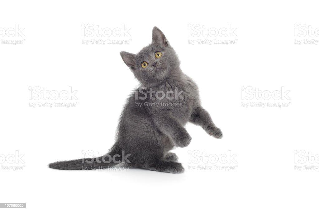 Juguetón gato - foto de stock