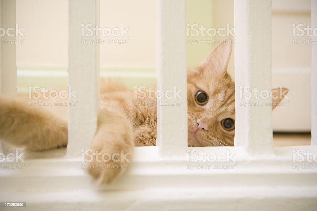 Playful Cat royalty-free stock photo