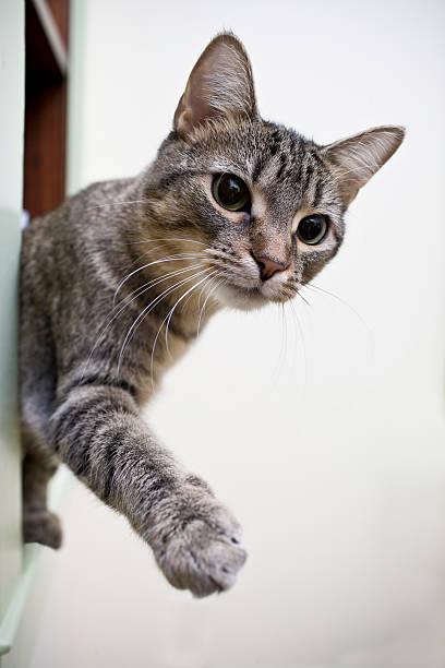 Playful cat picture id182198933?b=1&k=6&m=182198933&s=612x612&w=0&h=hky3u4oc3wuphmefqflboyy62kyndnth2 pm4 fnd w=