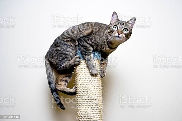 Playful cat picture id182494510?b=1&k=6&m=182494510&s=612x612&h=w8mlybp5jmyjrafudekbdt0qpdmthumfuavcr qkzae=