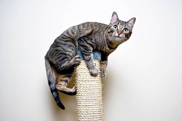 Playful cat picture id182494510?b=1&k=6&m=182494510&s=612x612&w=0&h=vuyemv0i4zgbdt9q3d2sxe2tfjhjc0rey7f9vuqdf 4=