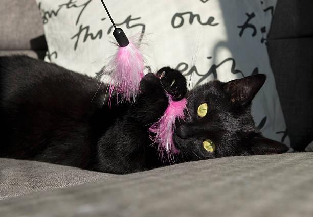 Playful cat picture id185869647?b=1&k=6&m=185869647&s=612x612&w=0&h=os0z2 qhiup5bn4olphzw1ma943nhbatmisqf3oi8 k=