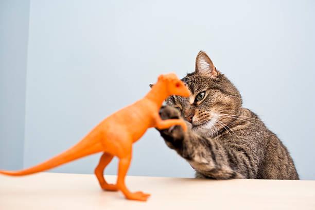 Playful cat picture id187342968?b=1&k=6&m=187342968&s=612x612&w=0&h=fnrqh0 jonqnye9zr1uo5cc3zoszkgbysspwhefuq88=