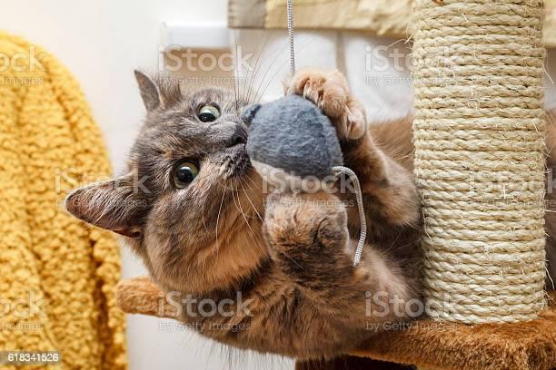 Playful cat picture id618341526?b=1&k=6&m=618341526&s=612x612&h=jb2s6ggvyzsmtqivs7wpj7cnfyuewigafeahua7fnsw=