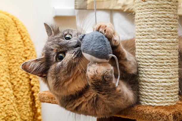 Playful cat picture id618341526?b=1&k=6&m=618341526&s=612x612&w=0&h=u iz ti35osso5xfu7z7xaqglj5evxsabgsz x2aesq=